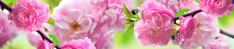 Kwiaciarnia Pruchna – Anna Budzińska